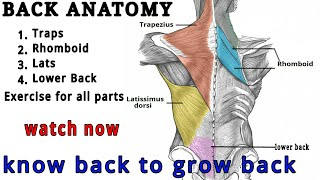 How To Build Back Muscle In Easy Way | BACK ANATOMY | Hindi
