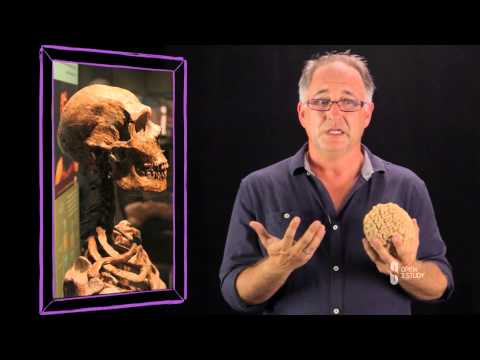 Free Becoming Human: Anthropology Course - Overview - Open2Study
