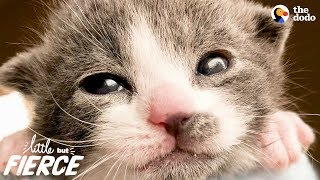 Tiniest, Cutest Animals Have The Biggest Hearts | The Dodo Little But Fierce