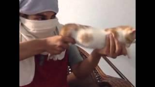 Нереально смешные коты и котята.Подборка №1