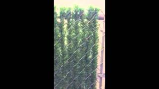Dura Hedge Privacy Slats For Chain Link Fence