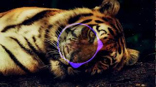 Dua Lipa New Rules Edit Alison Wonderland NA NO Remix