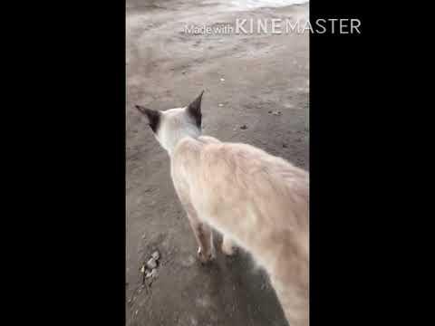 The Brown Cat Stunts