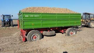 #Vlog 37 Ostatnie kopanie ziemniaka! Ujawniam kwity z dostaw! Z Gopro na kombajnie ✔