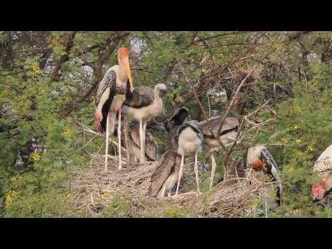 Wildlife in Keoladeo National Park (November 2016)