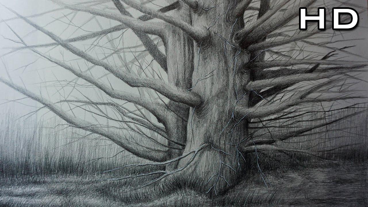 Hermoso Dibujo Realista de un rbol a Lpiz Dibujando Naturaleza