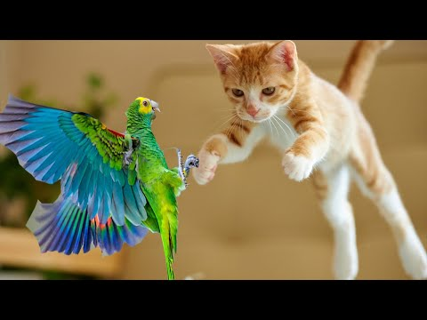 Birds Watching For Cats Dogs Kids Cute Parrot Doing Funny Things Talking Singing Dancing Live 16