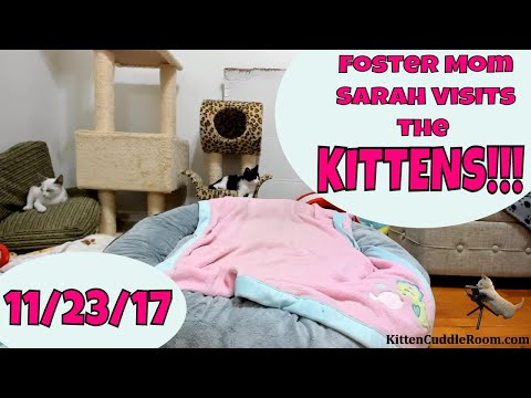 Foster Mom Sarah Visits the Kittens 11/23/17 Kitten Cuddle Room LIVE ...