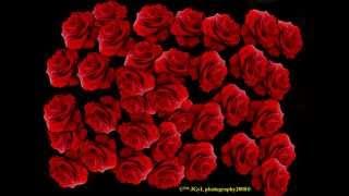 اغنيه الورد الاحمر سامو زين