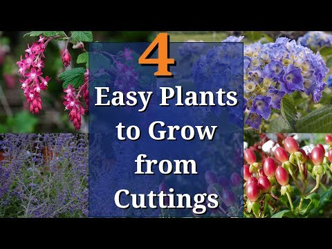 4 Easy Plants to Grow from Cuttings