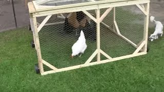 How To Build A Chicken Tractor 5 Finished!