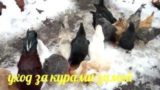 Куры несутся зимой как летом(мой опыт содержание кур зимой наша группа в https://vk.com/public116235735., 2016-03-10T09:37:31.000Z)