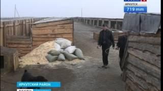 """Приют """"Сталкер"""" больше не будет заниматься отловом бродячих животных в Иркутске, """"Вести Иркутск"""""""
