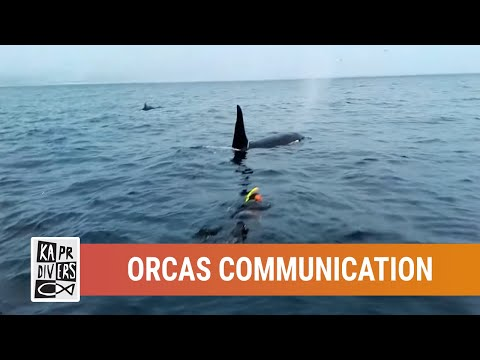 Communication attempt between Orcas and human