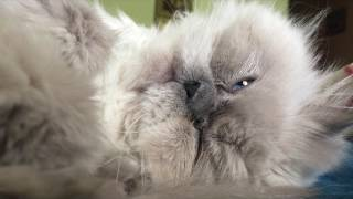 Кот спит без задних ног