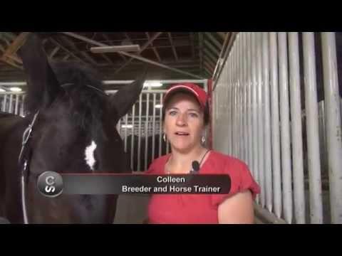 Horse breed 101 - The Percheron