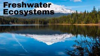 Freshwater ecosystem types