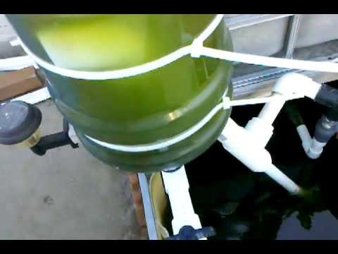 Diy Aquaponics Swirl Filter Update Youtube