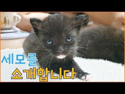 아기고양이 4남매 구조 영상 [8] - 아기고양이 입양보내요 (세모편)