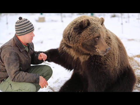 A pilot brought up a bear cub - Amazing story of friendship between a bear and a man