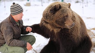 A pilot brought up a bear cub  Amazing story of friendship between a bear and a man