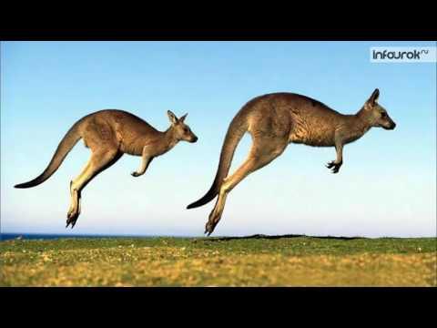 30 Особенности природы Австралии   7 класс