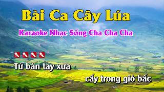 Bài Ca Cây Lúa Karaoke Nhạc Sống Minh Công