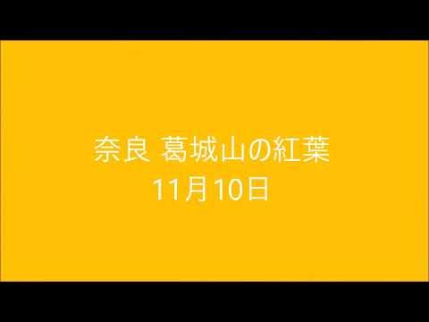 2018年 紅葉 by ゆうやん