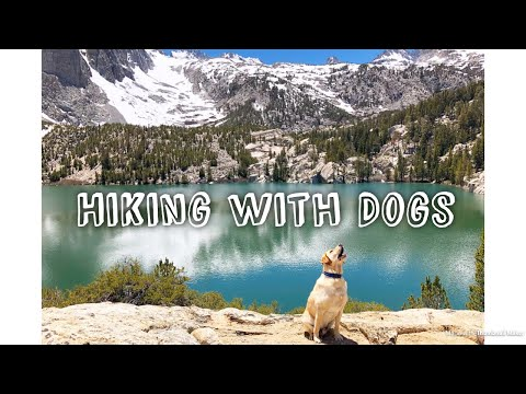 Hiking with Dogs - Big Pines