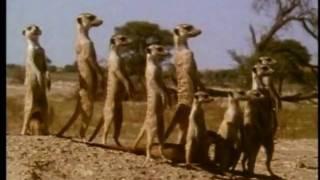 Про мультфильм Король Лев (The Lion King) (2)