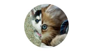 Милые котята и щенки