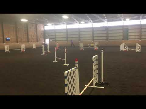 Smudge's Jumpers Run at the American Manchester Terrier Club Trial on April 13, 2019