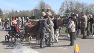 Repeat youtube video The London Harness Horse Parade 2015