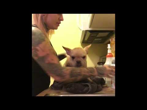 Curing Demodectic Mange Using Natural Home Remedies