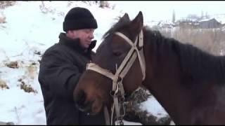 Охота в Камышинском районе Волгоградской области