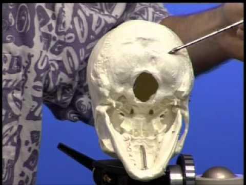 Anatomie - Caput - Schädel - YouTube