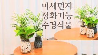 키우기쉬운 수경식물 / 유리병 테이블연출 /미세먼지정화…