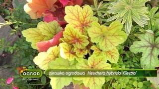 Rośliny ozdobne aż do mrozów - Ogród Bez Tajemnic