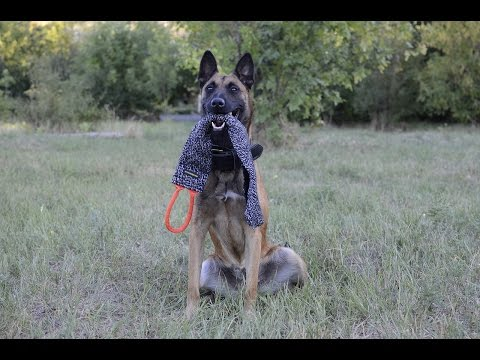 Malinois training with Bite Rag for Puppies and Young Dogs