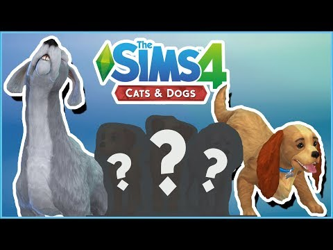 Lady and the Tramp's Puppy Surprises!! 🐱🐶 Sims 4: Cats & Dogs