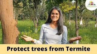 Quick Permaculture Tip - Protect your Trees from Termite