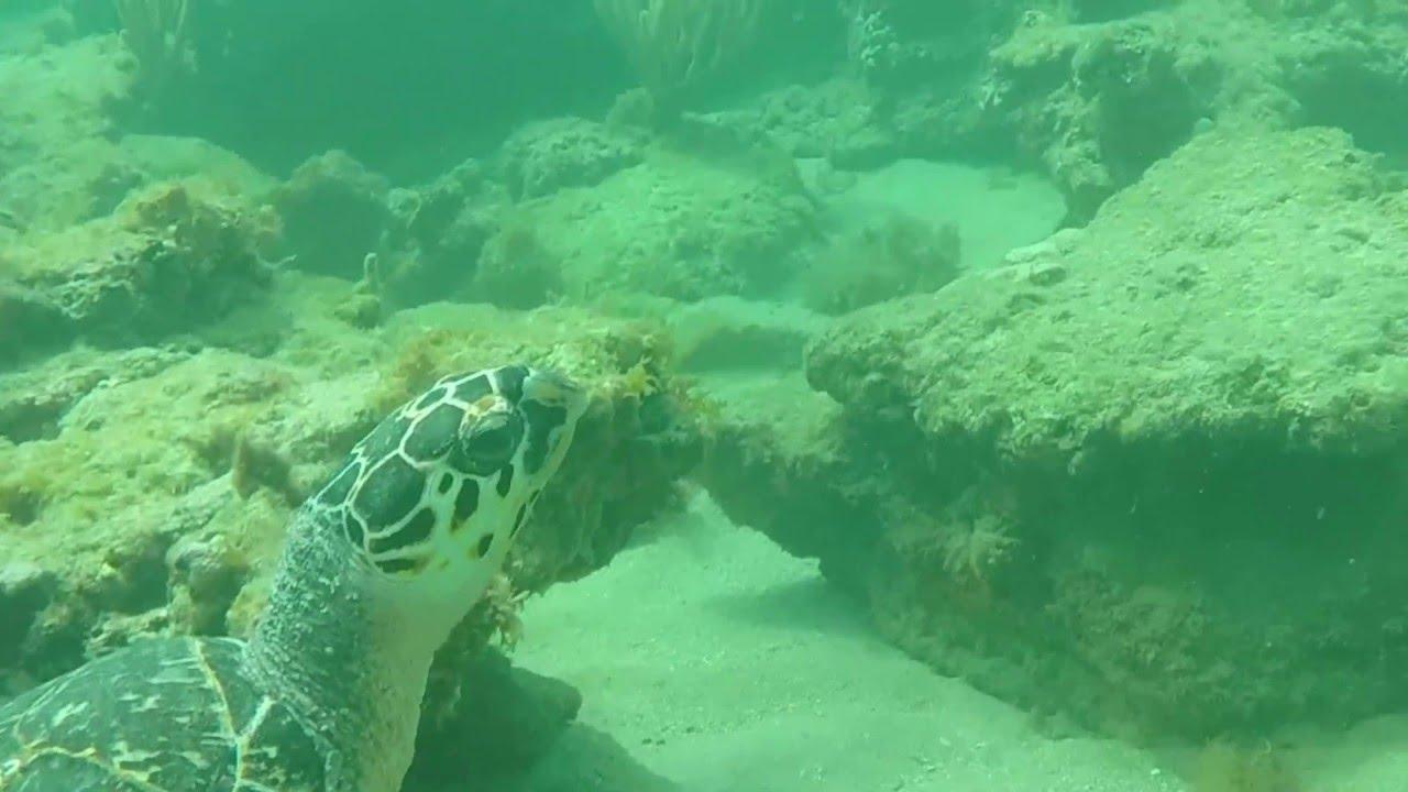 Snorkeling Pompano Beach Fl You