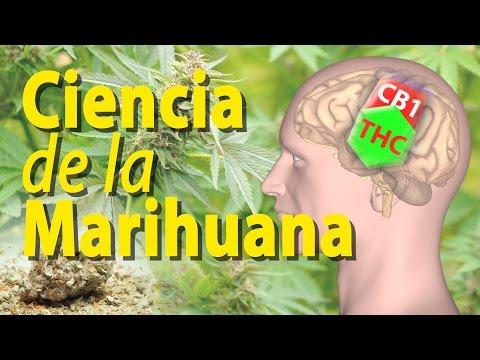 Efectos de la Marihuana sobre el Cerebro, Animación. Alila Medical Media Español.