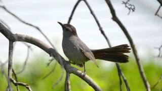 【12時間BGM】小鳥のさえずり 勉強、睡眠、作業用/12 Hours Birdsong, Sleep, Relaxation, Meditation screenshot 1