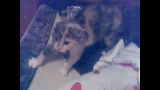 Котенок кричит как ребенок)))