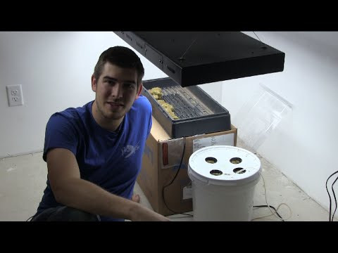 World's Most Simple $5 DIY Hydroponic Setup QUICK EZ & CHEAP