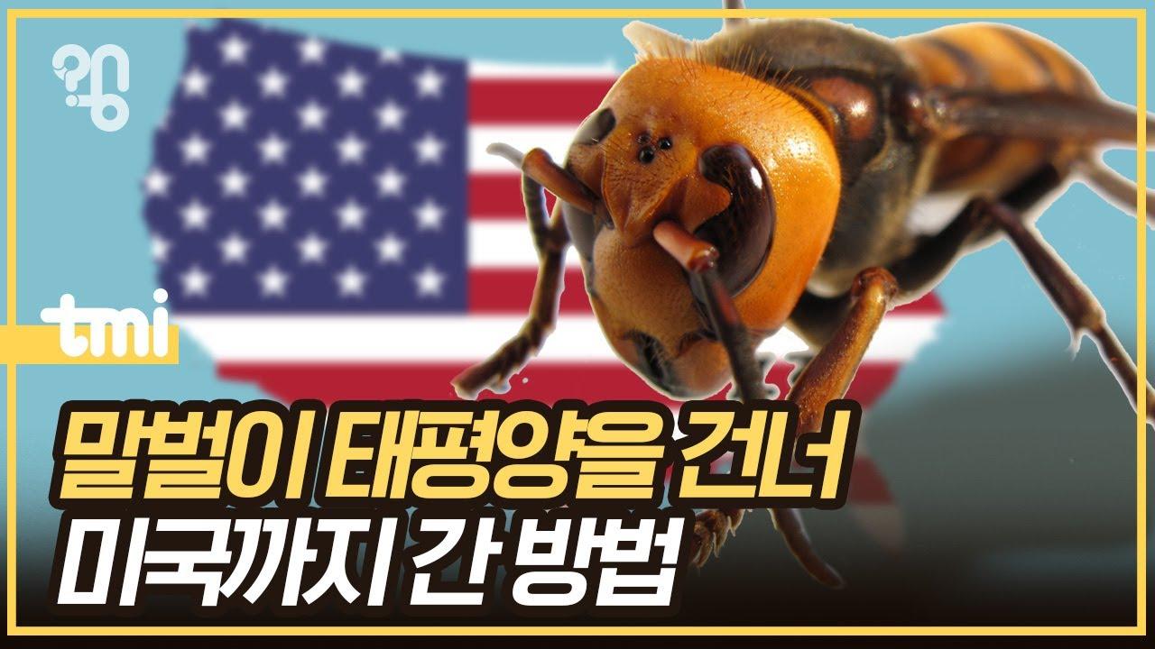 장수말벌은 어떻게 미국까지 갔을까?