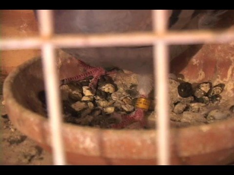 The nest box tells the story