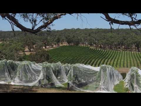 The Mornington Peninsula Wine Region, Part 1