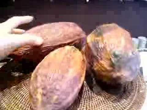 Cocoa Pods from Venezuela, Madagascar & Ecuador